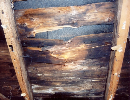 Sheathing damaged by condensation, which allowed rot to occur, which then weakened the wood. Dark wood shows the initial appearance of fungus, with white splotches revealing recurring growth.